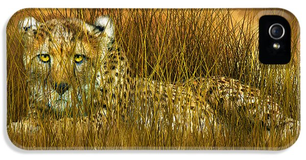 Cheetah - In The Wild Grass IPhone 5 / 5s Case by Carol Cavalaris