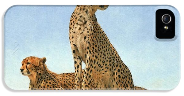 Cheetahs IPhone 5 / 5s Case by David Stribbling