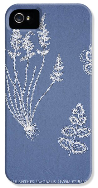 Fern iPhone 5 Cases - Cheilanthes fragrans iPhone 5 Case by Aged Pixel