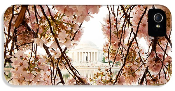 District Columbia iPhone 5 Cases - Cherry Blossom Flowers in Washington DC iPhone 5 Case by Susan  Schmitz