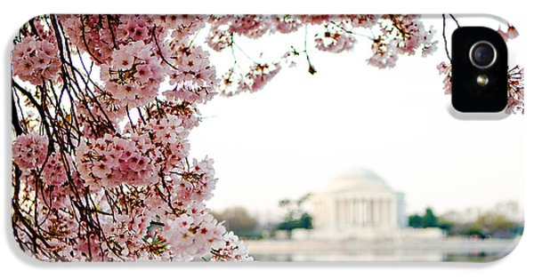 District Columbia iPhone 5 Cases - Cherry Blossoms Framing the Jefferson Memorial iPhone 5 Case by Susan  Schmitz