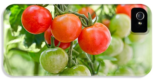 Cherry Tomatoes IPhone 5 / 5s Case by Delphimages Photo Creations