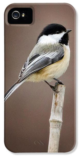 Chickadee IPhone 5 / 5s Case by Bill Wakeley