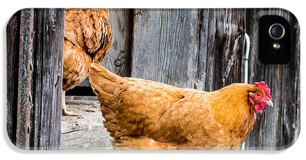 Livestock iPhone 5 Cases - Chickens at the Barn iPhone 5 Case by Edward Fielding