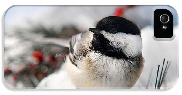 Chilly Chickadee IPhone 5 / 5s Case by Christina Rollo
