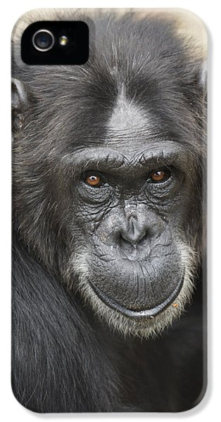 Chimpanzee Portrait Ol Pejeta IPhone 5 / 5s Case by Hiroya Minakuchi