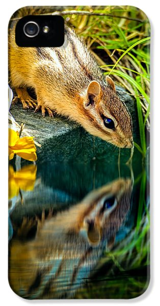 Aged iPhone 5 Cases - Chipmunk Reflection iPhone 5 Case by Bob Orsillo