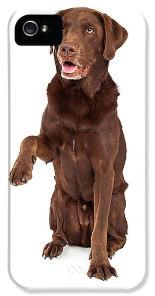 Greet iPhone 5 Cases - Chocolate Labrador Paw Extended iPhone 5 Case by Susan  Schmitz