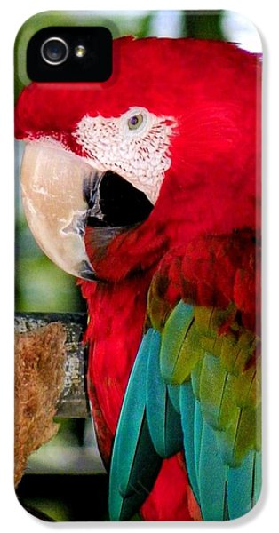 Chowtime IPhone 5 / 5s Case by Karen Wiles