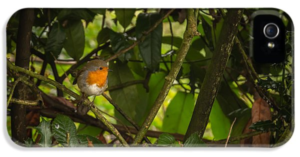 Beak iPhone 5 Cases - Christmas card model iPhone 5 Case by Chris Fletcher
