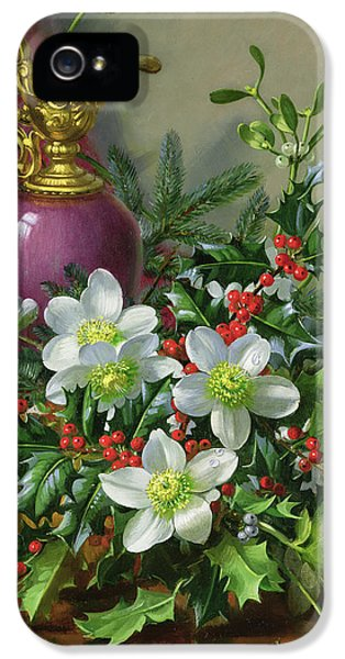 Prickly Rose iPhone 5 Cases - Christmas roses iPhone 5 Case by Albert Williams