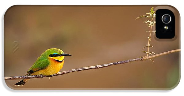 Avian iPhone 5 Cases - Cinnamon-chested Bee-eater iPhone 5 Case by Adam Romanowicz