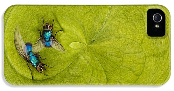 Circling iPhone 5 Cases - Circle of flies iPhone 5 Case by Jean Noren