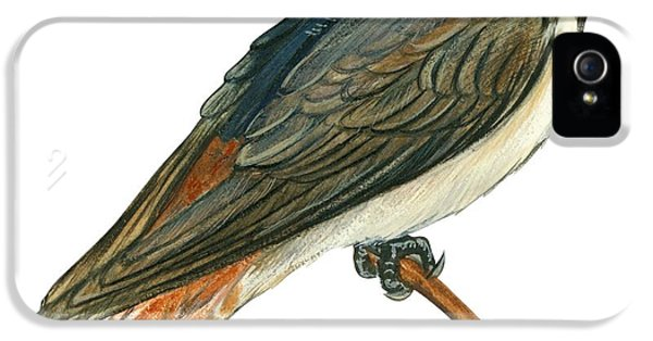 Cliff Swallow  IPhone 5 / 5s Case by Anonymous