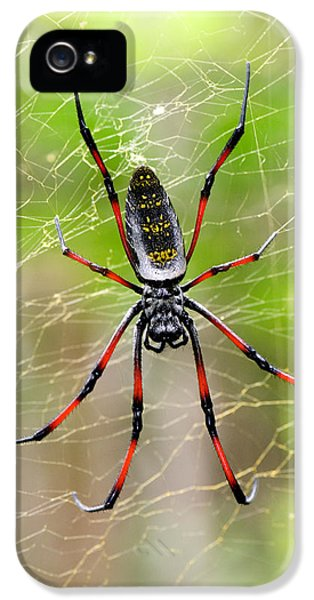 Spider iPhone 5 Cases - Close-up Of A Golden Silk Orb-weaver iPhone 5 Case by Panoramic Images