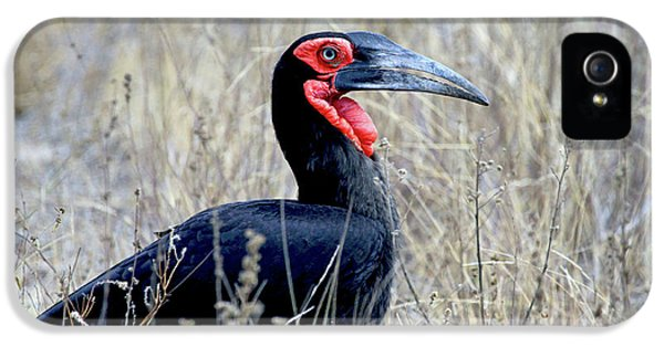 Close-up Of A Ground Hornbill, Kruger IPhone 5 / 5s Case by Miva Stock