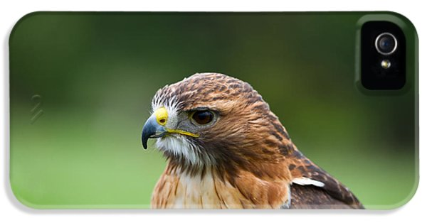 Red Tailed Hawk iPhone 5 Cases - Close-up Of A Red-tailed Hawk Buteo iPhone 5 Case by Panoramic Images