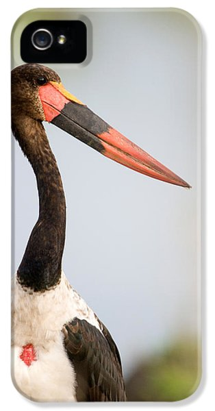 Close-up Of A Saddle Billed Stork IPhone 5 / 5s Case by Panoramic Images
