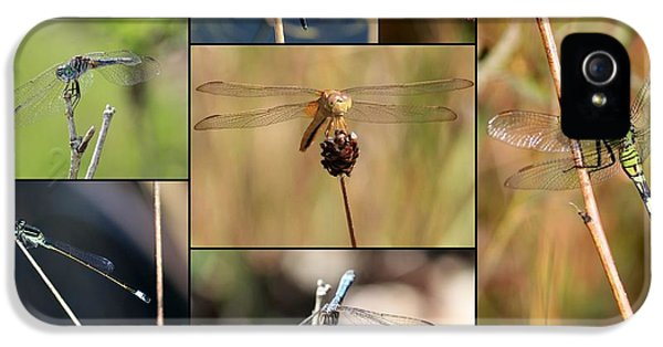 Collage Marsh Life IPhone 5 / 5s Case by Carol Groenen