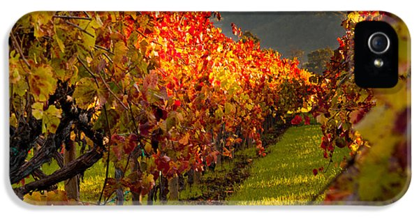 Color On The Vine IPhone 5 / 5s Case by Bill Gallagher