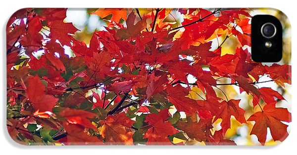 Colorful Maple Leaves IPhone 5 / 5s Case by Rona Black