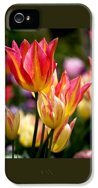 Square iPhone 5 Cases - Colorful Tulips iPhone 5 Case by Rona Black