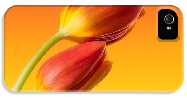 Tulips iPhone 5 Cases - Colorful Tulips iPhone 5 Case by Wim Lanclus