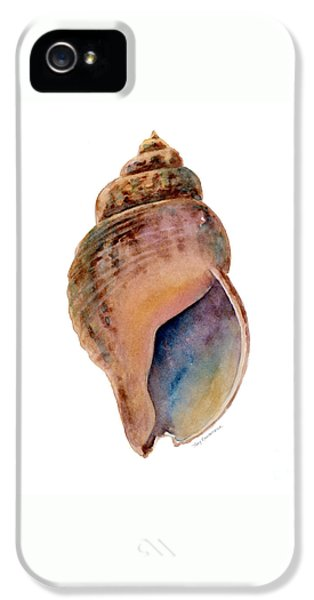 Common Whelk Shell IPhone 5 / 5s Case by Amy Kirkpatrick