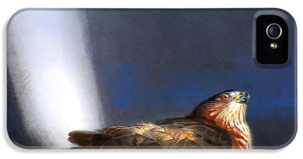 Prey iPhone 5 Cases - Coopers Hawk iPhone 5 Case by Aaron Blaise