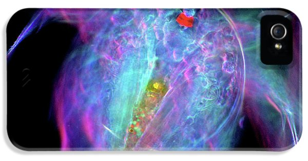 Copepod Larva IPhone 5 / 5s Case by Marek Mis