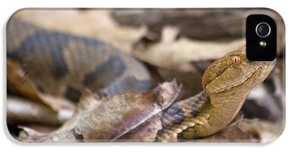 Copperhead In The Wild IPhone 5 / 5s Case by Betsy Knapp