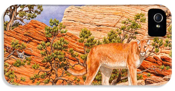 Red Tailed Hawk iPhone 5 Cases - Cougar - Dont Move iPhone 5 Case by Crista Forest