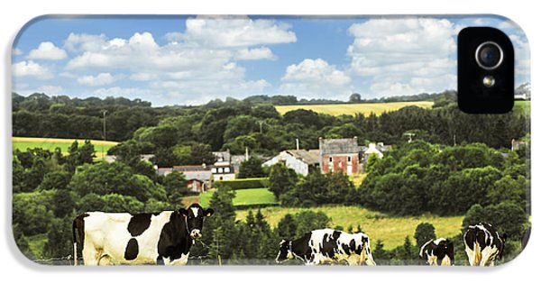 Livestock iPhone 5 Cases - Cows in a pasture in Brittany iPhone 5 Case by Elena Elisseeva