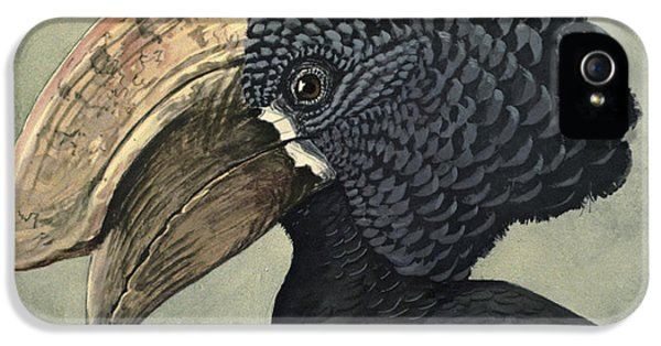 Crested Hornbill IPhone 5 / 5s Case by Louis Agassiz Fuertes