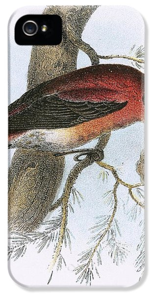 Crossbill IPhone 5 / 5s Case by English School