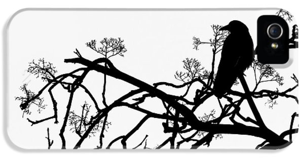 Sillouette iPhone 5 Cases - Crow iPhone 5 Case by Jasna Buncic