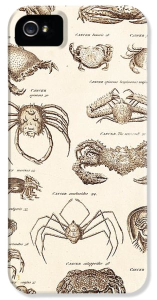 Arthropod iPhone 5 Cases - Crustacean Types iPhone 5 Case by David Parker