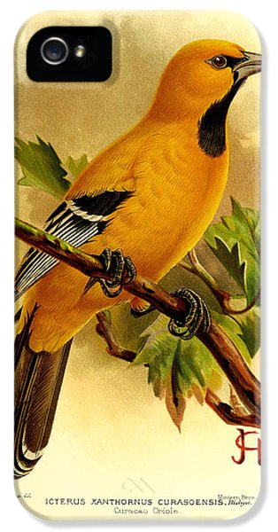 Curacao Oriole IPhone 5 / 5s Case by J G Keulemans