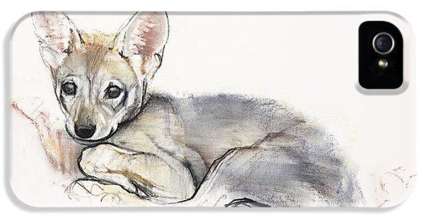Arabian iPhone 5 Cases - Curled Arabian Wolf Pup iPhone 5 Case by Mark Adlington