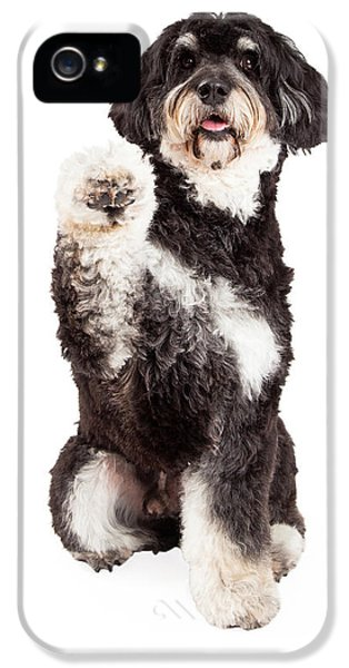 Greet iPhone 5 Cases - Cute Poodle Mix Breed Dog Shaking Paw iPhone 5 Case by Susan  Schmitz