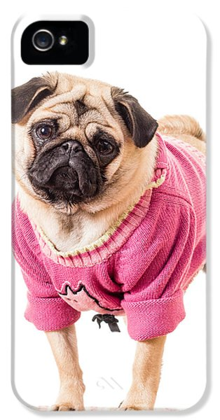 Dress iPhone 5 Cases - Cute Pug wearing sweater iPhone 5 Case by Edward Fielding