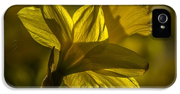 Backlight iPhone 5 Cases - Daff iPhone 5 Case by Chris Fletcher