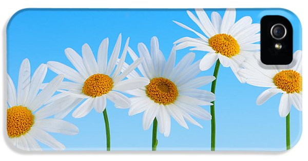 Summertime iPhone 5 Cases - Daisy flowers on blue background iPhone 5 Case by Elena Elisseeva