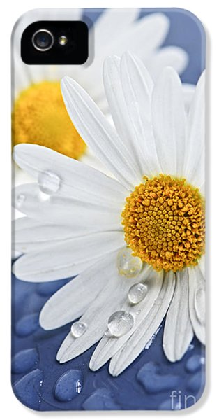 Tenderness iPhone 5 Cases - Daisy flowers with water drops iPhone 5 Case by Elena Elisseeva