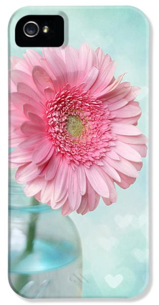 Pink Flowers iPhone 5 Cases - Daisy Love iPhone 5 Case by Amy Tyler