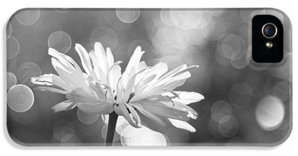 Raining iPhone 5 Cases - Daisy Rain iPhone 5 Case by Theresa Tahara