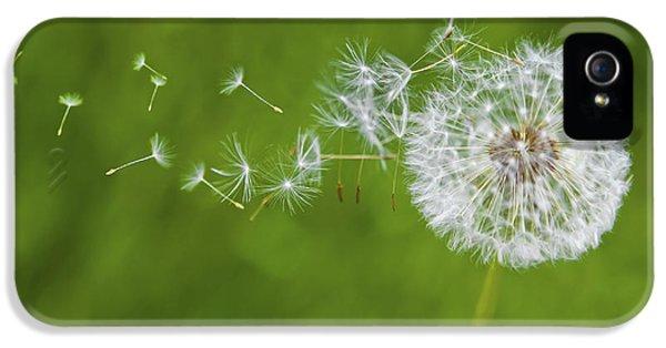 Dandelion In The Wind IPhone 5 / 5s Case by Diane Diederich