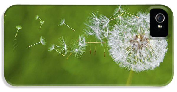 Blowing iPhone 5 Cases - Dandelion in the Wind iPhone 5 Case by Diane Diederich