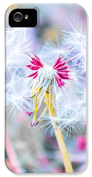 Playful iPhone 5 Cases - Pink Dandelion iPhone 5 Case by Parker Cunningham