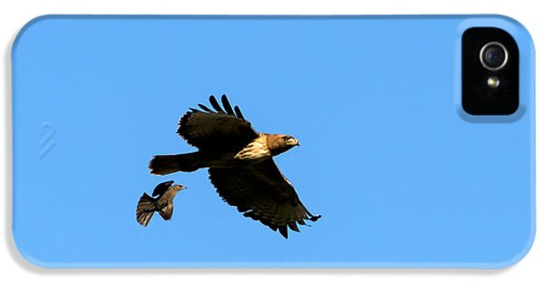Red Tailed Hawk iPhone 5 Cases - David and Goliath iPhone 5 Case by Mike  Dawson